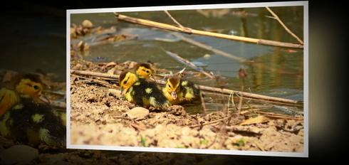 האגם בראש העין. צילום: מתוך הסרטון שפרסם אילן פורת