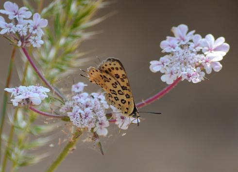 להציל את הפרפרים   צילום: אביטל גיל