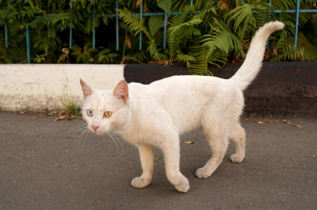 חתול רחוב. אילוסטרציה: shutterstock